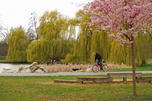 Public Parks that AllowBBQs!