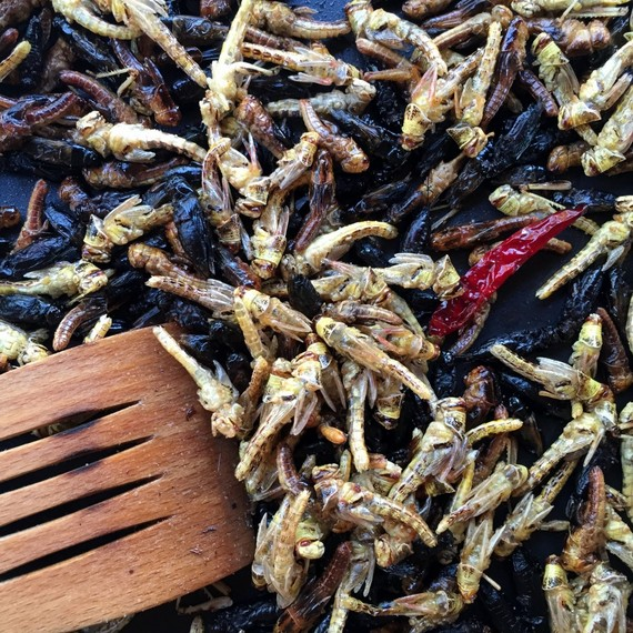 Edible Insects Take theSpotlight