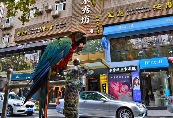 Shanghai's French Concession: PhotoDiary