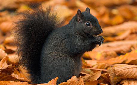 Squirrel is the New Black – Since 1961