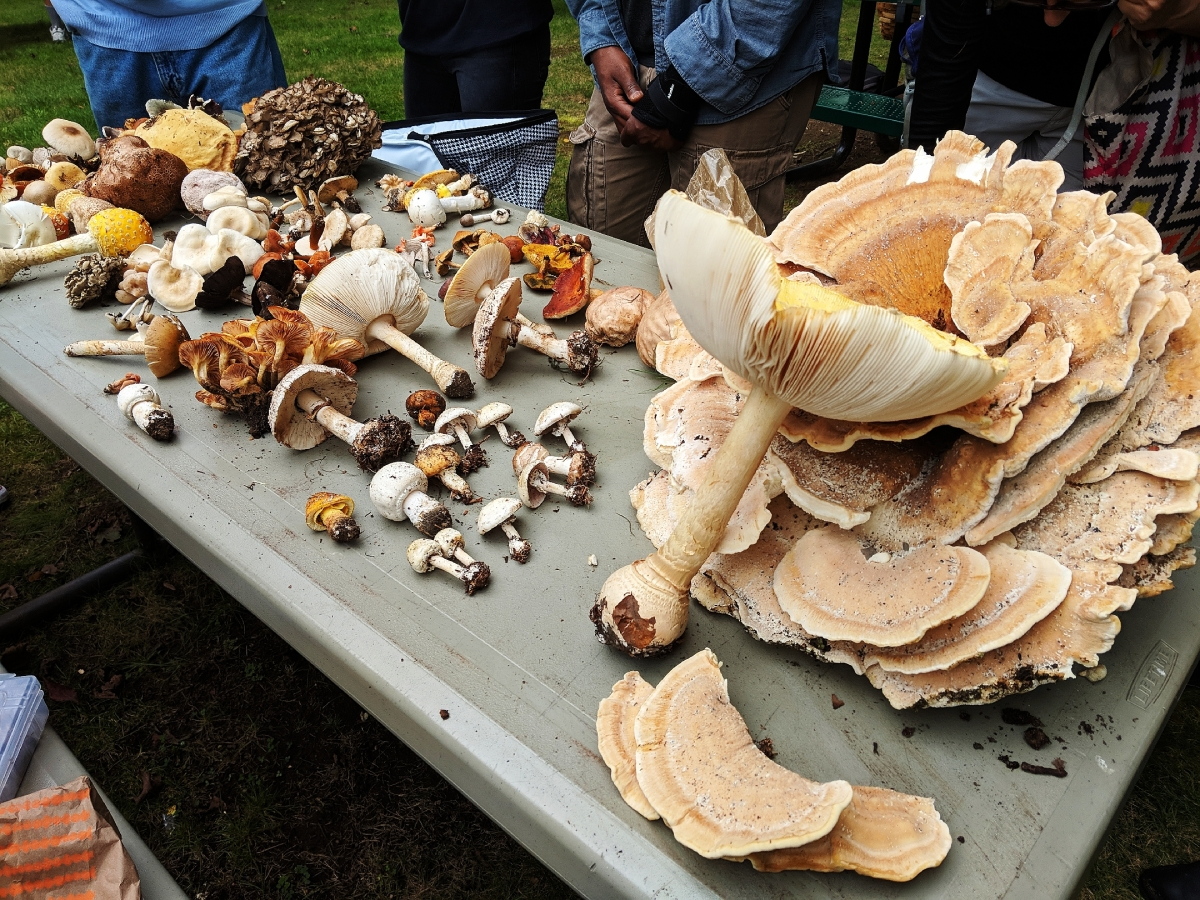 The New York Mycological Society